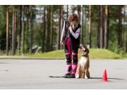 Kurs høsten 2019: Valp/unghund/Hverdagslydighet
